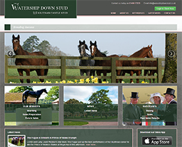 Website Design for Watership Down Stud